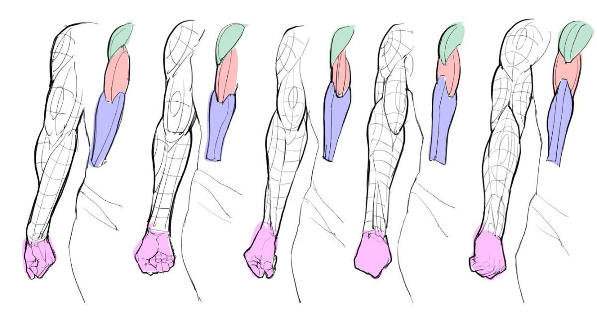 腕の筋肉と骨の基本②回内回外時の腕の筋肉変化と考察漫画素材工房
